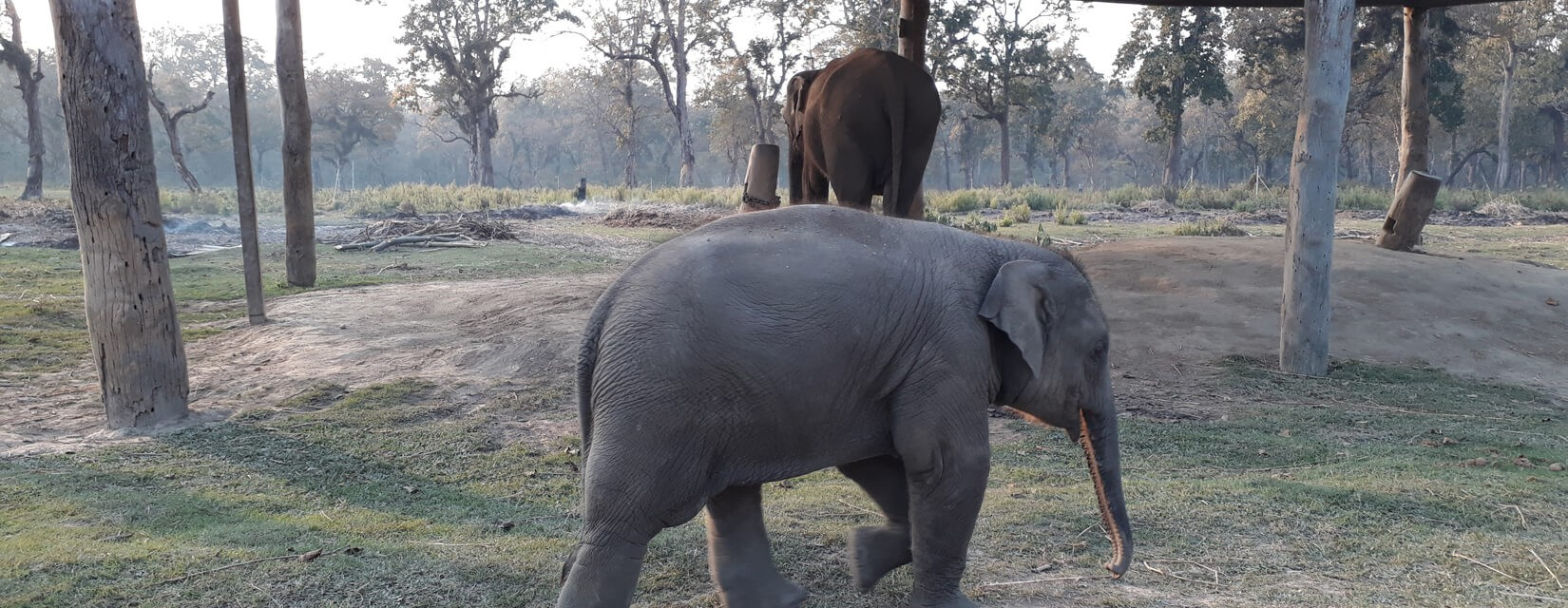 Elephant- Chitwan - Jungle Safari
